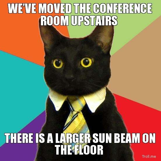 WE'VE MOVED THE CONFERENCE ROOM UPSTAIRS, THERE IS A LARGER SUN BEAM ON THE FLOOR | Business Cat Needs | Troll Meme Generator