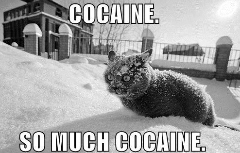 Cocaine, so much cocaine